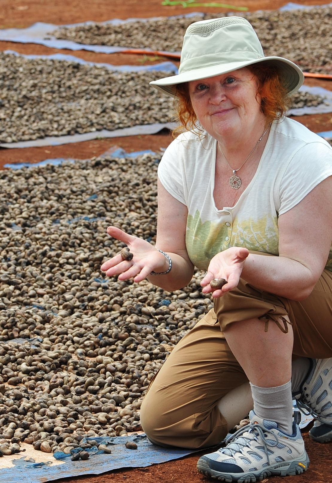cashews drying