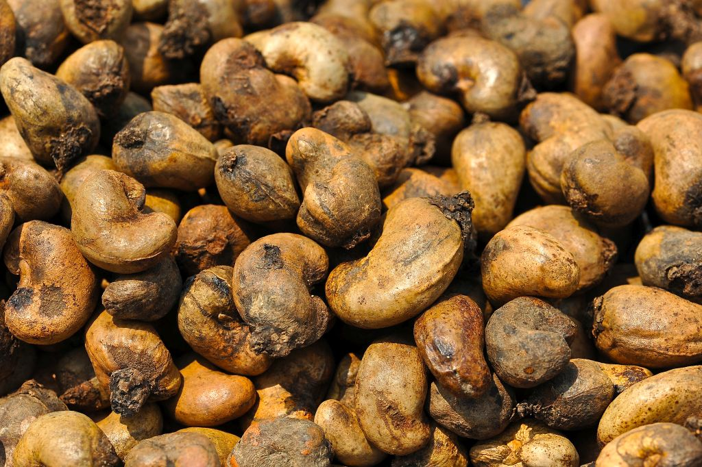 Processed cashew nuts.